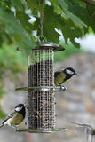 Bird feeder Royalty Free Stock Photos