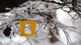 Bird Feeder Hanging On Snowy Tree Branch stock footage