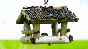 Bird feeder hanging on the tree. Birds feed on seeds. Bird feeder hanging on the tree. Help people to animals stock video