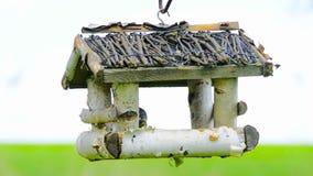 Bird feeder hanging on the tree. Birds feed on seeds. Bird feeder hanging on the tree. Help people to animals stock footage
