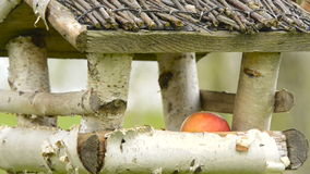 Bird feeder hanging on the tree. Birds feed on seeds. Bird feeder hanging on the tree. Help people to animals stock video footage