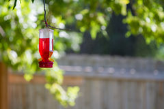 Bird feeder hanging from a tree branch Stock Photos