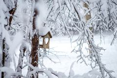Bird feeder hanging on a tree in a snowy pine forest royalty free stock photos