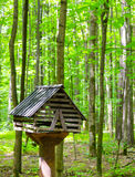 The bird feeder. Is located in green forest Stock Photos