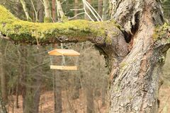 Bird feeder on old tree. Wooden feeder for birds hanging on branch of old tree covered with moss in forest stock photo