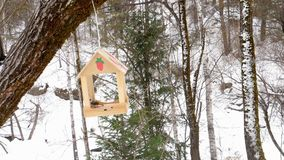 Bird feeder in the park. Birds eating seeds from the feeder, winter day stock video footage