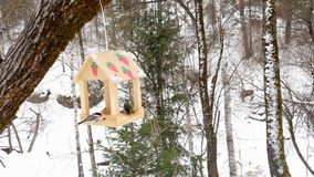 Bird feeder in the park. Birds eating seeds from the feeder, winter day stock footage