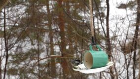 Bird feeder in the park stock video