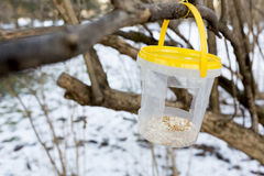 Bird feeder park Stock Photo