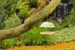 Bird feeder in the park Stock Image