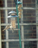 Bird Feeder Royalty Free Stock Images