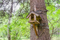 The bird feeder and protein. The bird feeder in a green Park. Wooden bird feeder on the tree. The bird feeder in the form of the house, which is tied to the Royalty Free Stock Photo