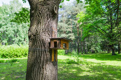 The bird feeder and protein. The bird feeder in a green Park. Wooden bird feeder on the tree. The bird feeder in the form of the house, which is tied to the Royalty Free Stock Photography