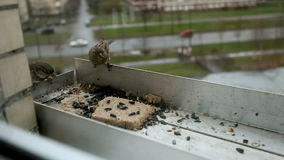 Bird feeder stock video footage