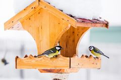 Bird feeder with tits in winter. Bird feeder with blue and great tits in winter Royalty Free Stock Photography