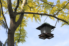 Bird Feeder in a Tree Royalty Free Stock Photography