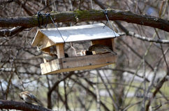 The bird feeder. On a tree Royalty Free Stock Photo