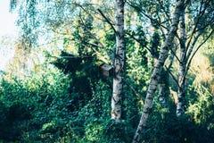 Bird Feeder on Tree Stock Photo