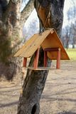 Bird feeder on tree in park Stock Photography