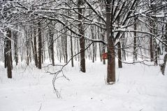 Bird feeder on the tree in the Park. Winter forest, trees in the snow, frosty winter Stock Images