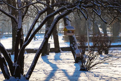 Bird feeder on the tree in the Park winter landscape Royalty Free Stock Photos