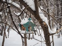 Bird feeder on a tree under newly fallen snow in Novosibirsk, Russia.  royalty free stock images