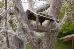 Bird feeder in tree with webs Royalty Free Stock Photos