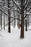 Children built a bird feeder. Bird feeder on tree in winter forest, children built in Park, snow, cold, winter Stock Photography