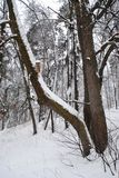 Bird feeder on the tree. Bird feeder on a tree in the winter wood, big bent tree, Russia, Park Stock Photo