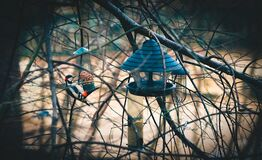 Bird and feeder in trees Royalty Free Stock Images
