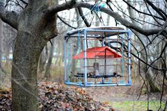 Bird feeder in the Vilnius city park Royalty Free Stock Photos