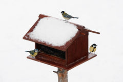 Bird feeder in winter Royalty Free Stock Image