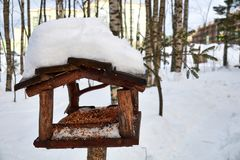 Bird feeder in the winter forest royalty free stock images