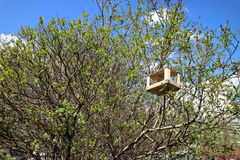 Bird feeder wooden simple one on top of the tree in summer stock photo