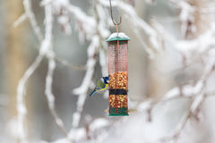 Bird feeders with a Blue Tit. In the garden in winter royalty free stock image