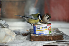 Bird feeders out of Ukrainian humanitarian aid Royalty Free Stock Photography