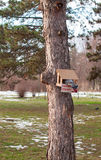 Bird feeders. Pigeon feeding from feeders mounted on wood Stock Image