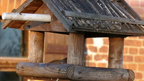Bird feeders. Sparrows in a bird feeders stock footage