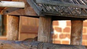 Bird feeders. Sparrows in a bird feeders stock video footage