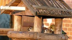 Bird feeders stock video footage