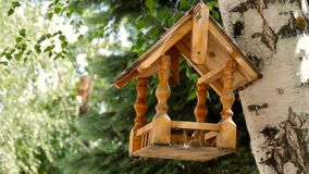 Bird feeders. tree house for the birds, cheerful apartment. Bird feeders. tree house for the birds, cheerful apartment stock video