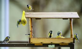 Bird feeders. tree house for the birds, cheerful apartment,. Great tit Royalty Free Stock Images