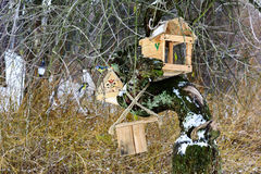 Bird feeders. Wooden racks for birds on a tree royalty free stock photo