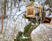 Bird feeders. Wooden racks for birds on a tree royalty free stock photography