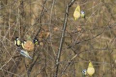Bird feeding Stock Photos