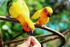 Bird feeding form hand Royalty Free Stock Photography