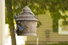 Bird feeding frenzy Stock Images
