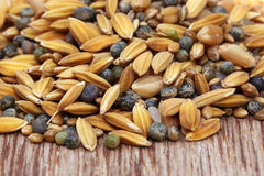 Bird feeding grains Stock Photo