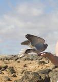 Bird feeding from hand Stock Photography