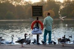 Bird feeding in Hyde Park, London in autumn. Stock Image